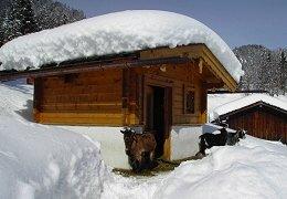 Ziegenhaltung im winter